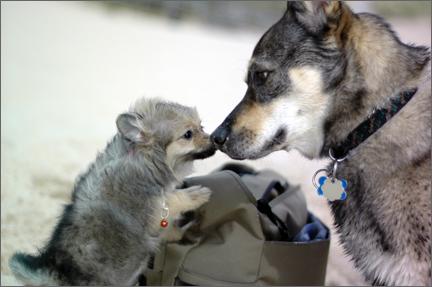dogbuds.jpg