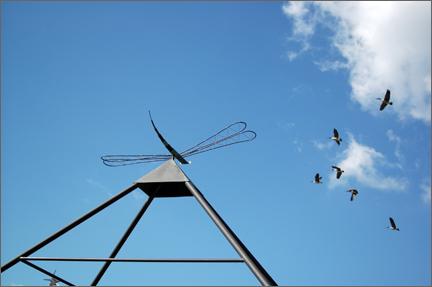 dragginfly.jpg