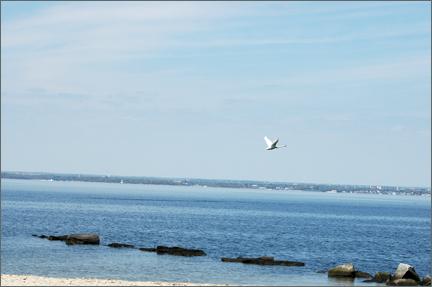 flyingswan.jpg