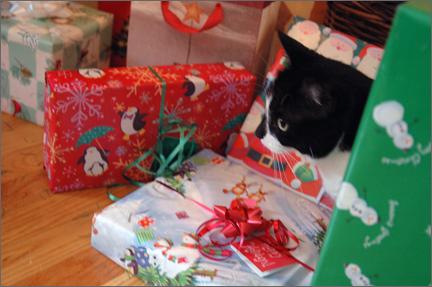 giftcat.jpg