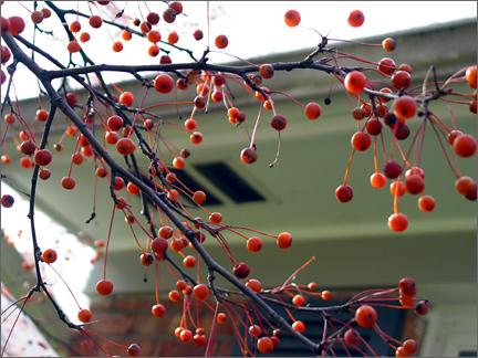 moreberries.jpg