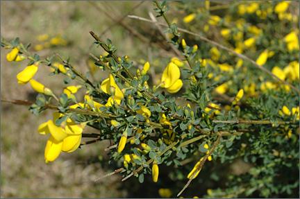 nantucketflowers.jpg
