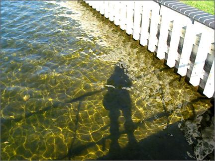 rivershadow.jpg