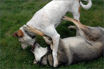 wrestlindogs.jpg